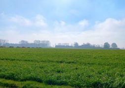 Terrain Agence d'Isneauville, Terrain 515m²