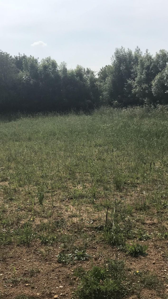 Photo du terrain à bâtir de 564 m² <br><span>LE MAZEAU(85)