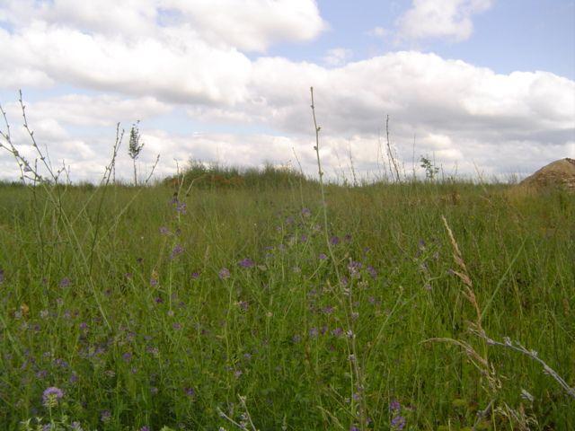 Photo du terrain à bâtir de 459 m² <br><span>NEUVILLE-DE-POITOU(86)