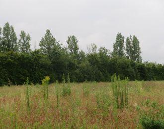 Photo du terrain à bâtir de 807 m² <br><span>VILLEFAGNAN(16)
