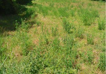 image terrain Terrain à bâtir de 2500 m² à BAZOCHES-SUR-LE-BETZ (45)