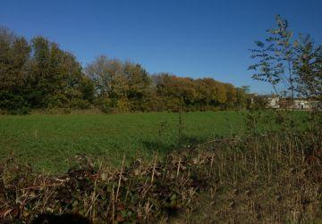 image terrain Terrain à bâtir de 2100 m² à CHUELLES (45)